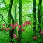 that green forest pink