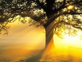 Finding Sunshine