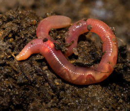donations sterile organic fertilizer earthworm castings